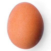 Chicken_egg_2009-06-04.jpg