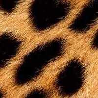leopard-fur-1.jpg
