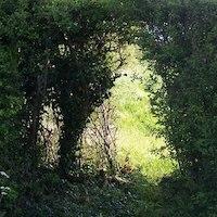 hedge-gap.jpg
